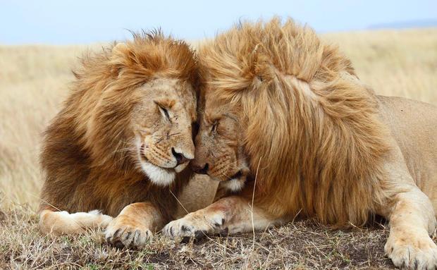 Homosexualität Bei Tieren