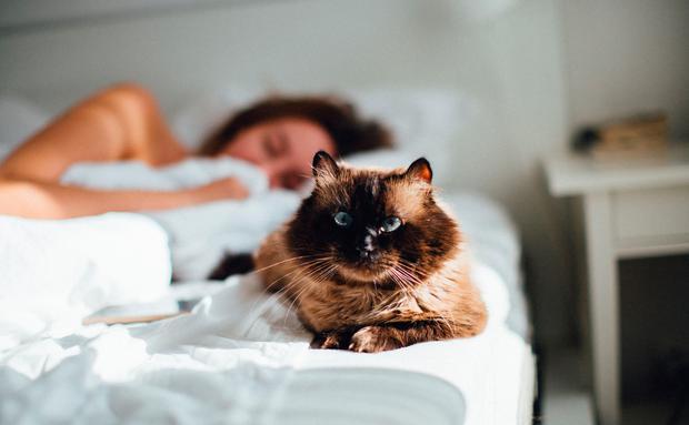 Impfstoff Gegen Katzenallergie