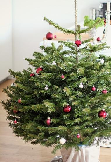 lebender weihnachtsbaum woman at. Black Bedroom Furniture Sets. Home Design Ideas