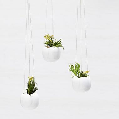 Pflanzen Hängend hängende pflanzen • woman.at