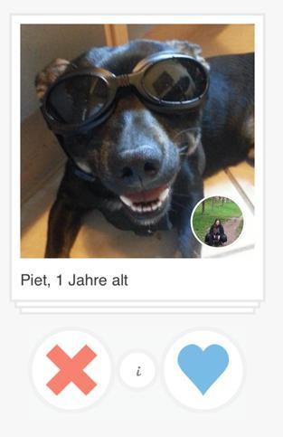 Dating-apps für tiere