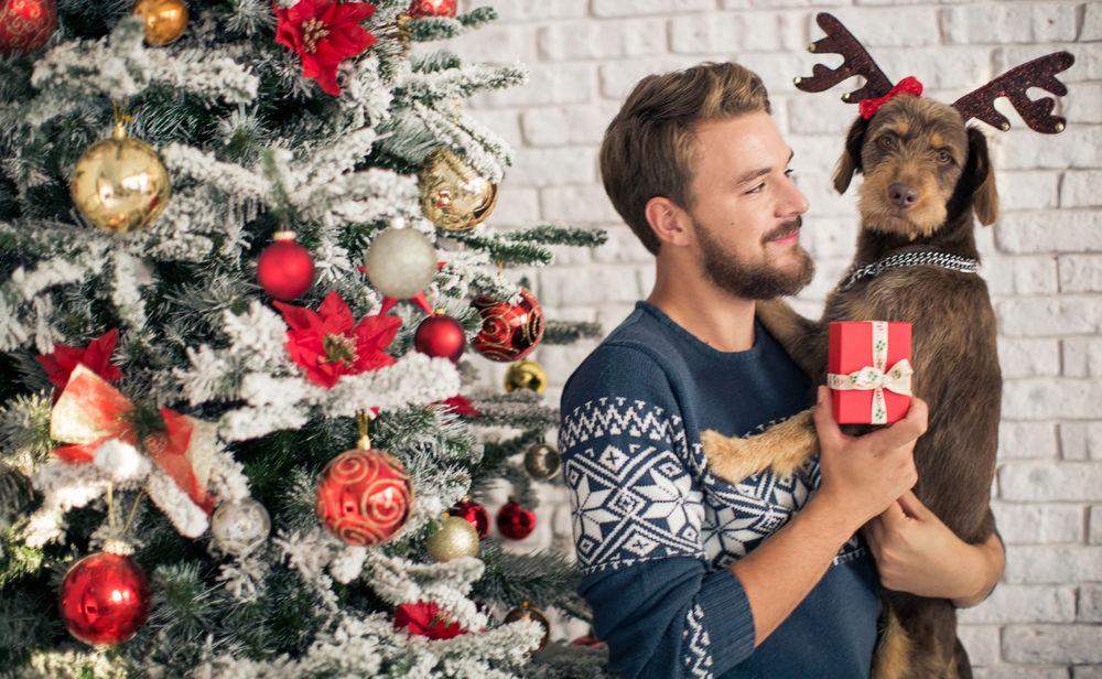 so gef hrlich kann weihnachten f r haustiere sein woman at. Black Bedroom Furniture Sets. Home Design Ideas