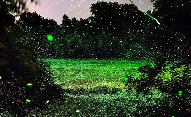 Fantastisch Glühwürmchen 24 Galerie - Elektrische ...