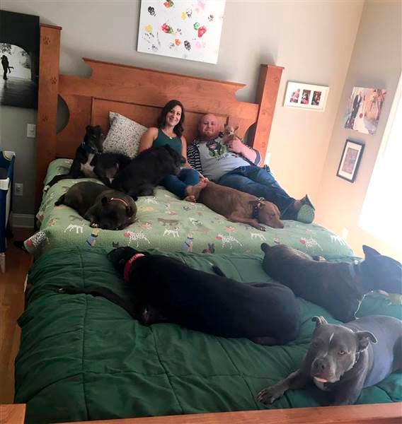 paar schl ft mit 8 hunde in riesigem bett woman at. Black Bedroom Furniture Sets. Home Design Ideas