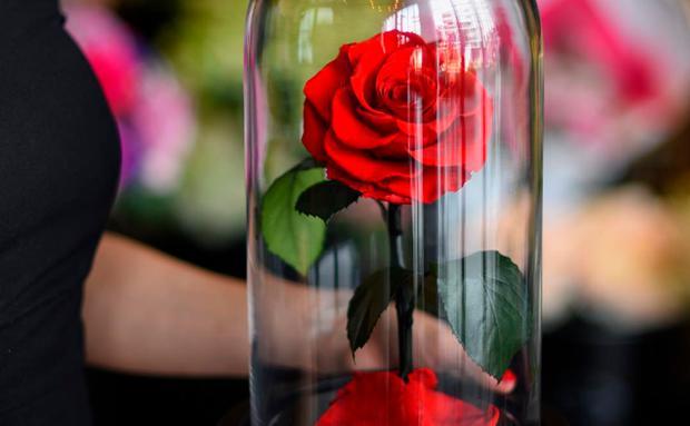 Die Schöne Und Das Biest Zitate Rose Motivierende Und