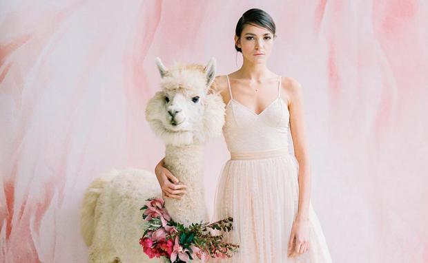 Lamas für Hochzeit mieten • WOMAN.AT