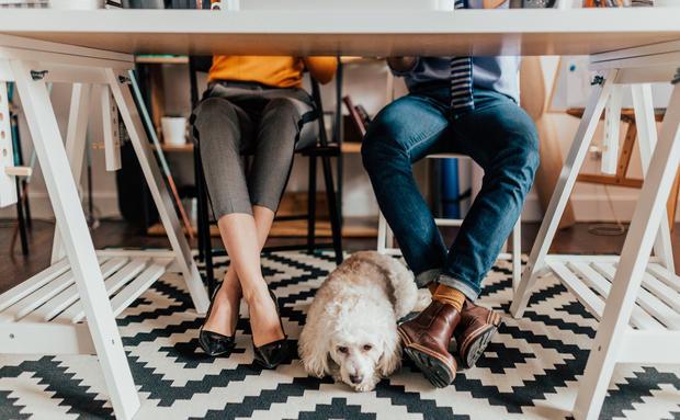nach der scheidung wer beh lt den hund woman at. Black Bedroom Furniture Sets. Home Design Ideas