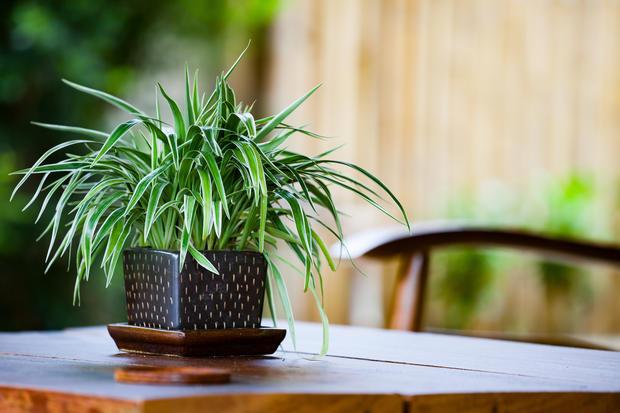 Diese 6 Pflanzen solltest du im Schlafzimmer haben • WOMAN.AT