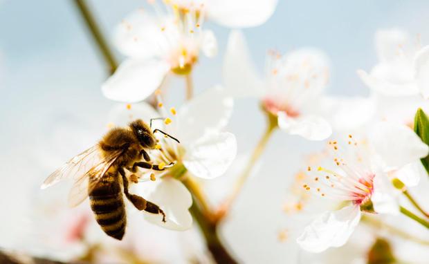 56e3d7e054cd So viele kesse Bienen - als Accessoire • WOMAN.AT